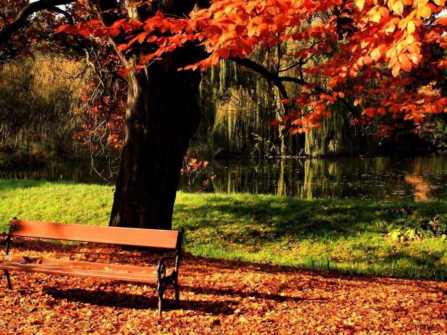 Болдинский парк