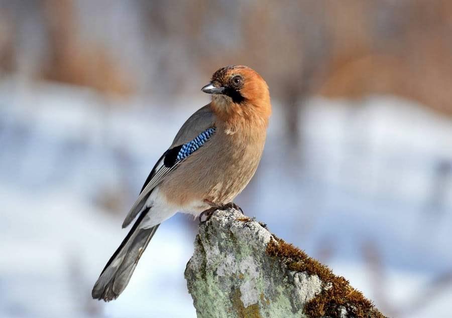 разнообразные птицы