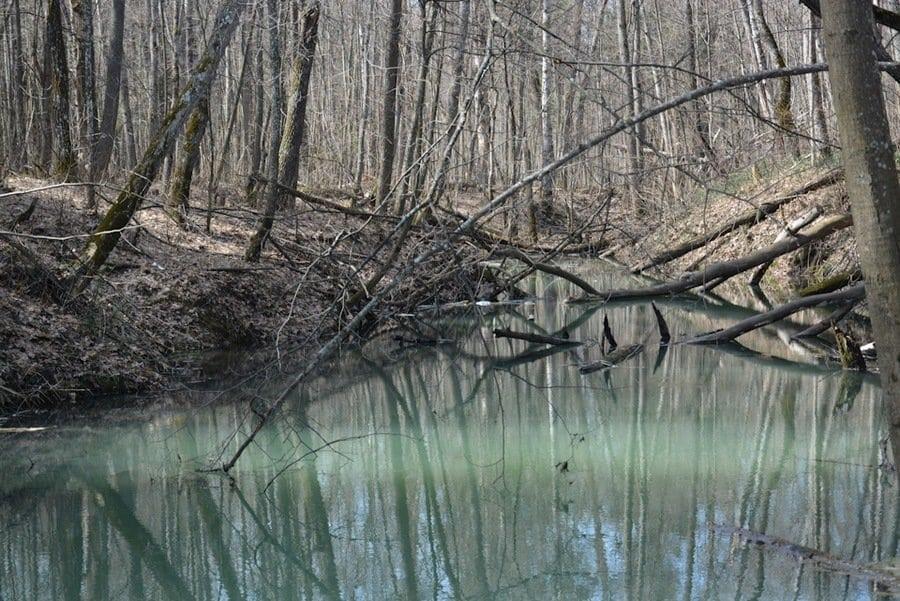 пруд на кленовой горе
