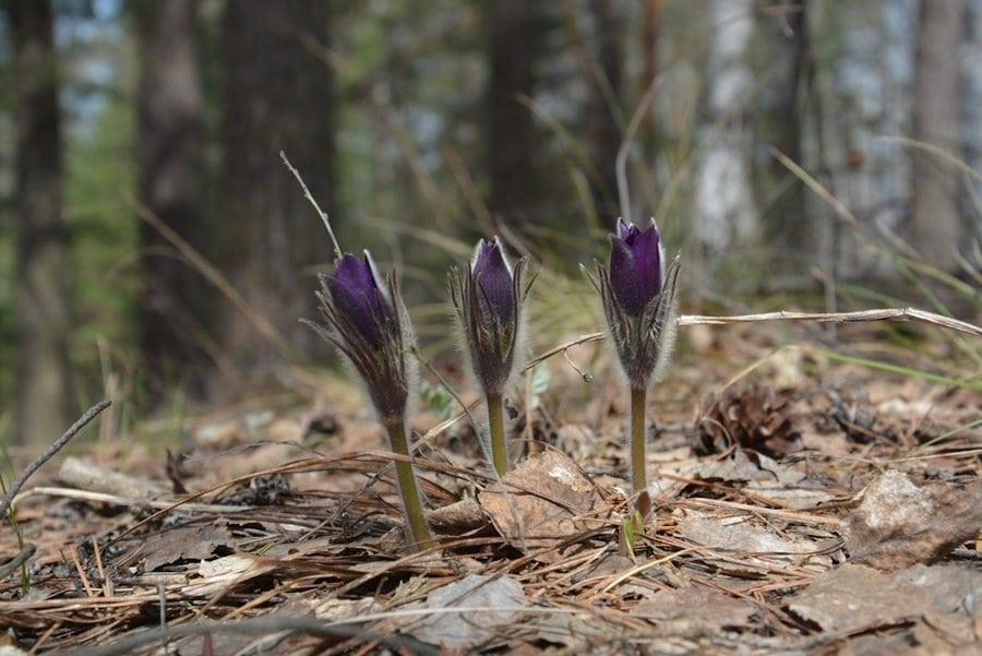 цветочки весной