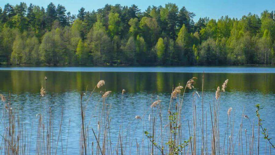 Озеро Светлояр – русское зазеркалье. Природа, история появления, отдых