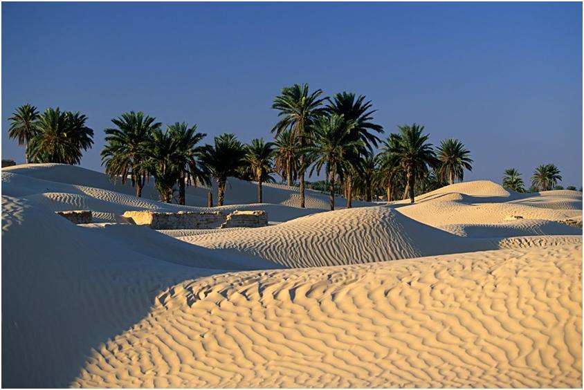 Тунис - идеальный курорт для отдыха с детьми