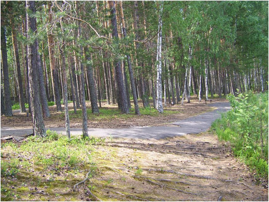 Озеро Карась республики Марий Эл – уникальный природный объект, особенности санаторно-курортного лечения