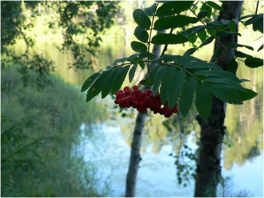 Озеро Мушаньер в Марий Эл – волшебный край для душевного отдыха, санатории