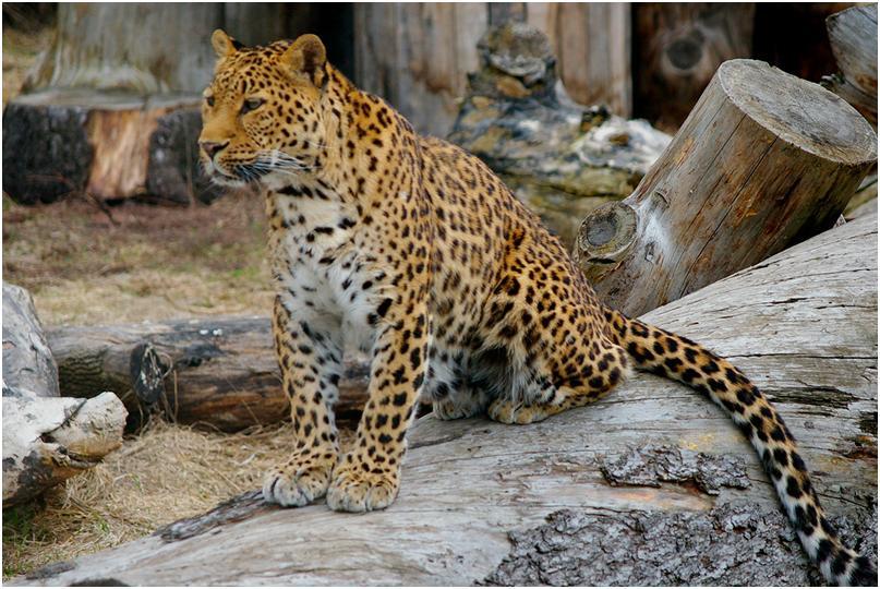 Зоопарк Ижевска